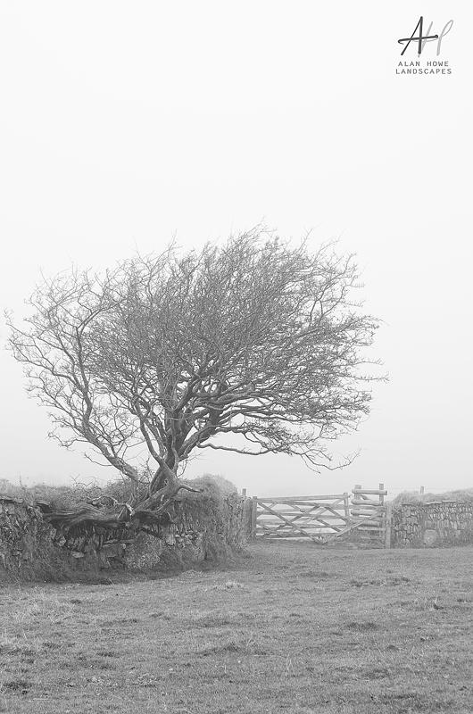 Dartmoor, fog, photography; Dartmoor National Park; Devon; photography