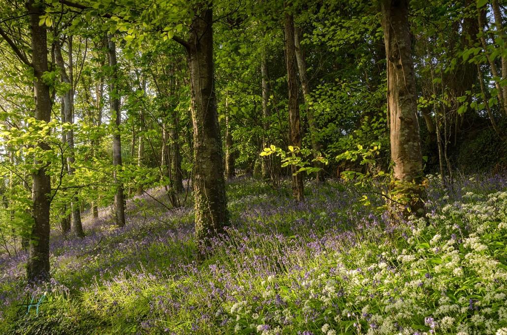 Buckland Abbey; National Trust